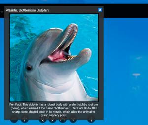 national aquarium dolphin